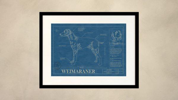 Weimaraner Dog Wall Blueprint