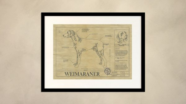 Weimaraner Dog Wall Drawing