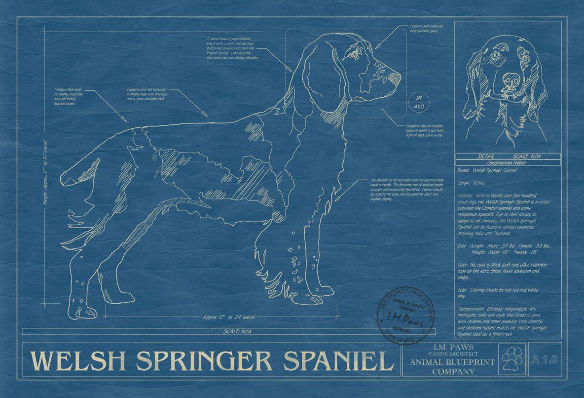 Welsh Springer Spaniel Dog Blueprint