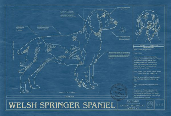 Welsh Springer Spaniel Dog Blueprint