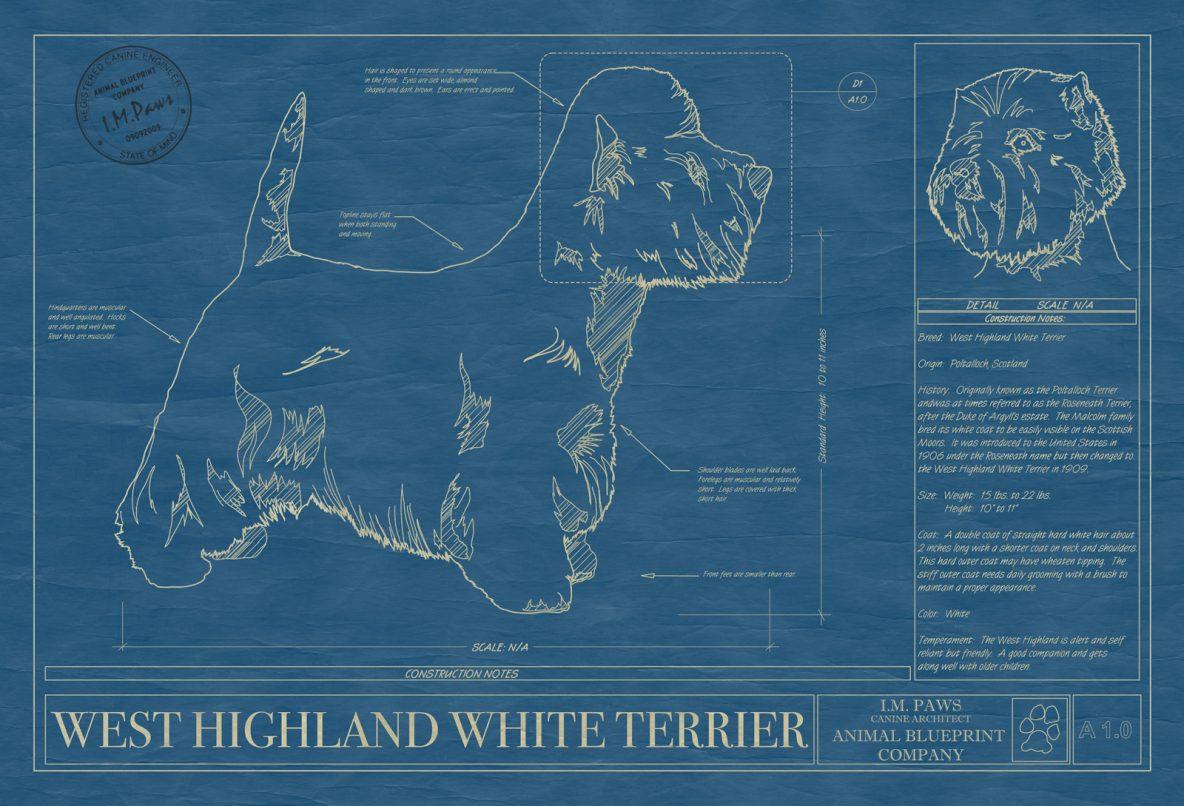 West Highland White Terrier Dog Blueprint