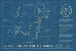 West Highland White Terrier Dog Blueprint