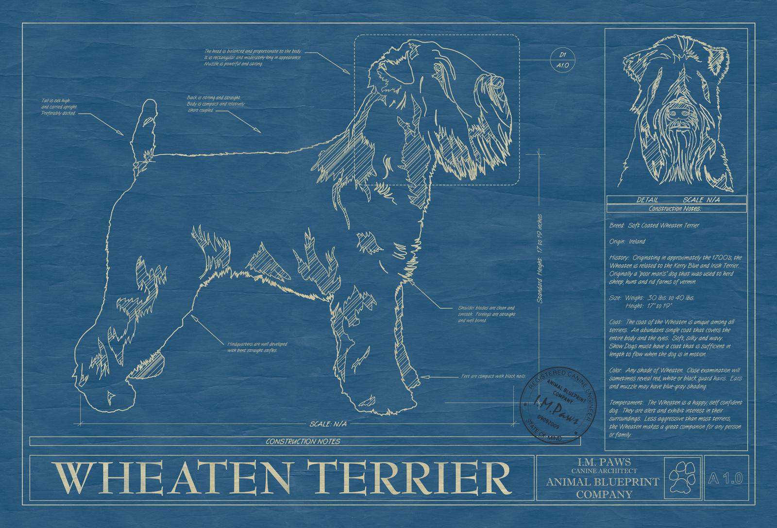 Wheaten terrier animal blueprint company wheaten terrier dog blueprint malvernweather Choice Image