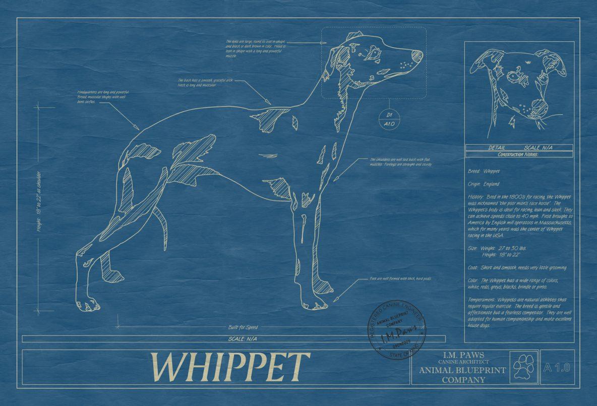 Whoodle Dog Blueprint