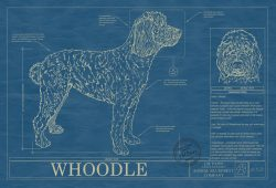 Whoodle Dog Blueprint