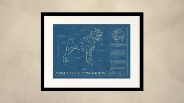 Wirehaired Pointing Griffon Dog Wall Blueprint