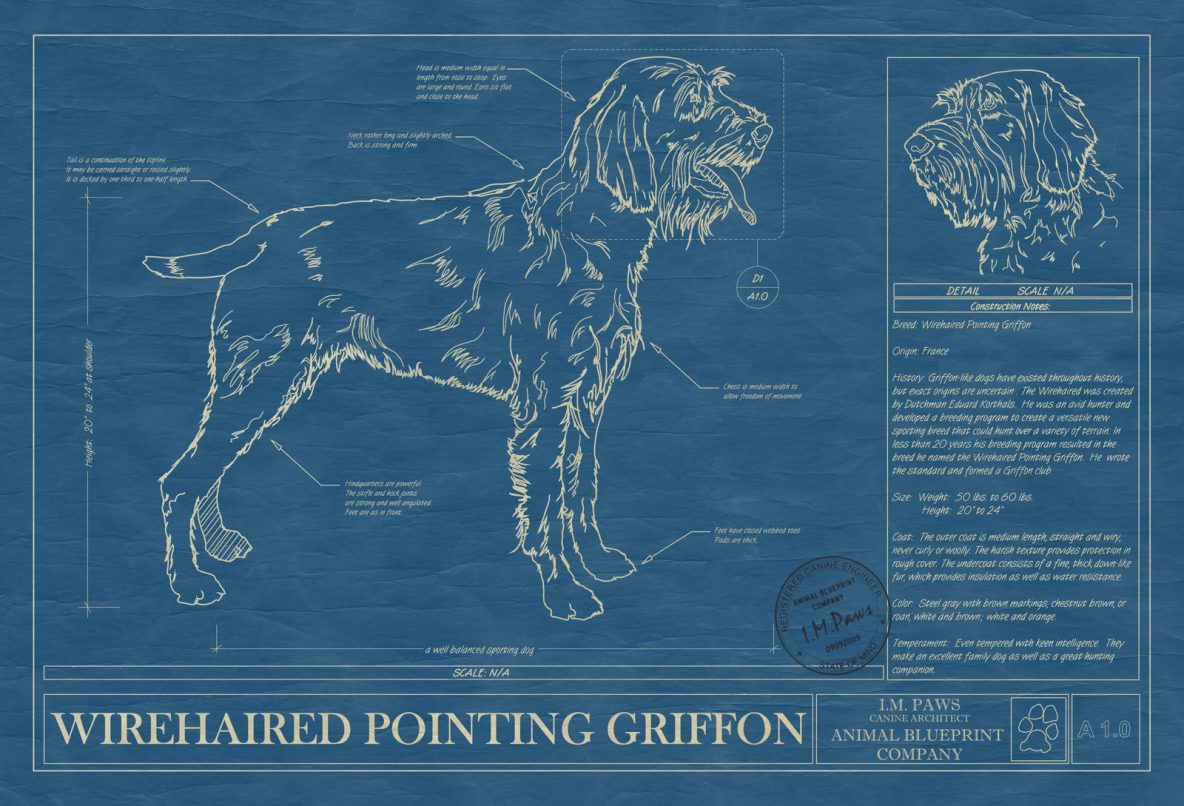 Wirehaired Pointing Griffon Dog Blueprint