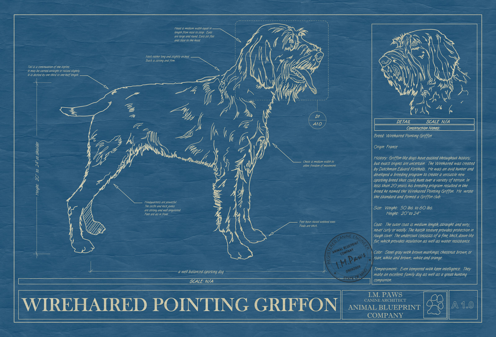 Wirehaired Pointing Griffon - Animal Blueprint Company