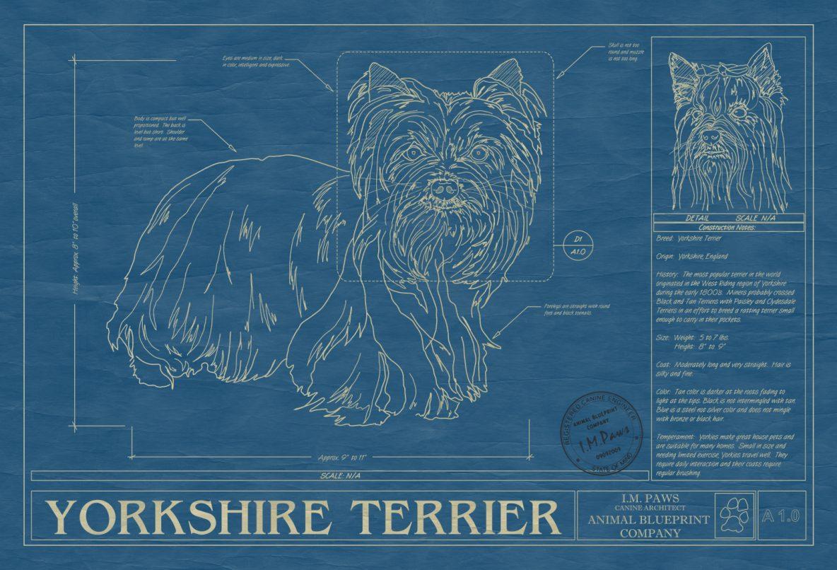 Yorkshire Terrier Dog Blueprint