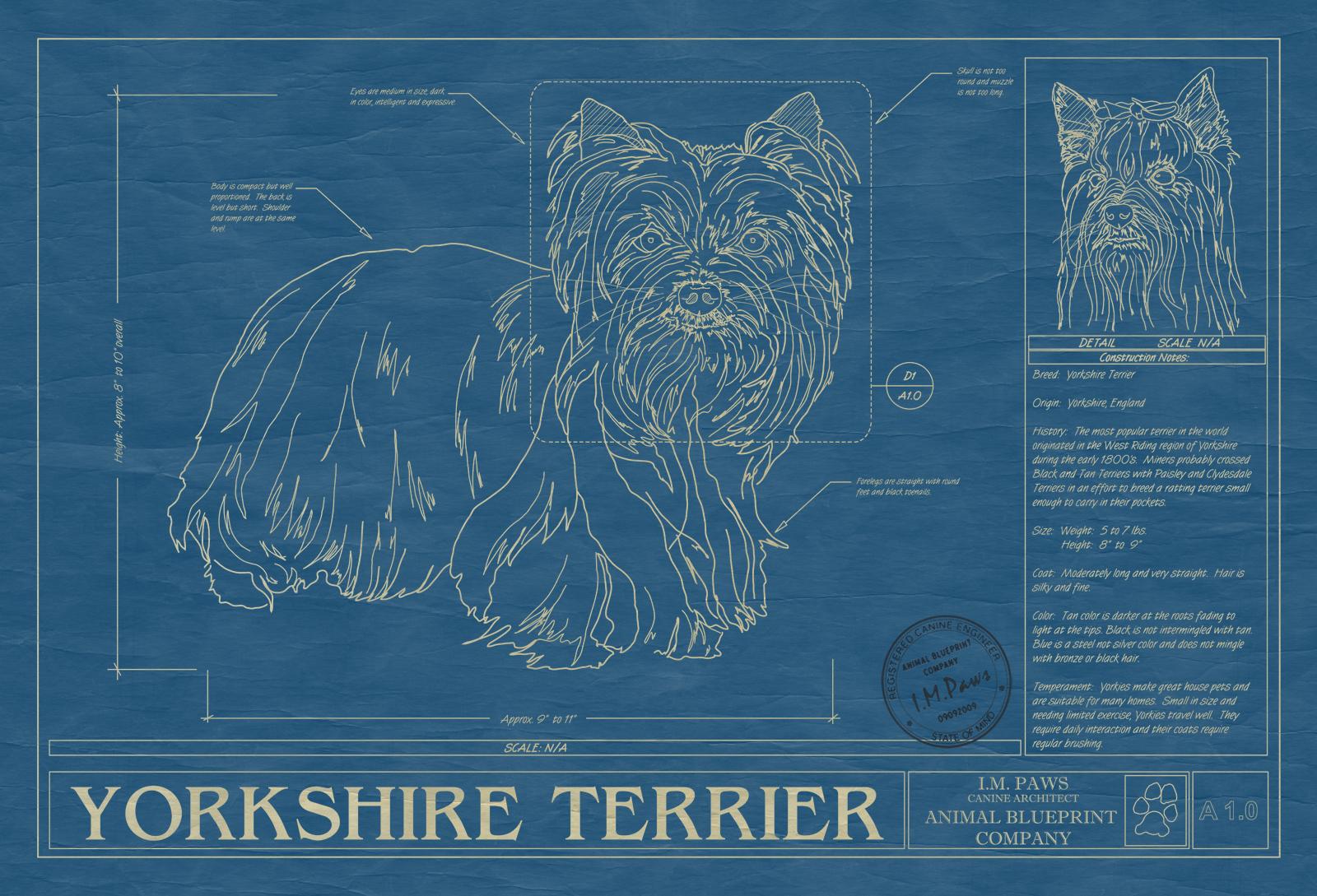 Yorkshire terrier animal blueprint company yorkshire terrier dog blueprint malvernweather Choice Image