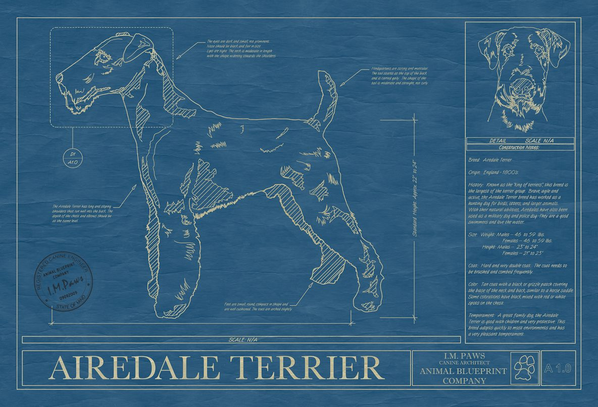 Pet dog animal art print drawings breeds from a to b animal blueprints airedale terrier malvernweather Image collections