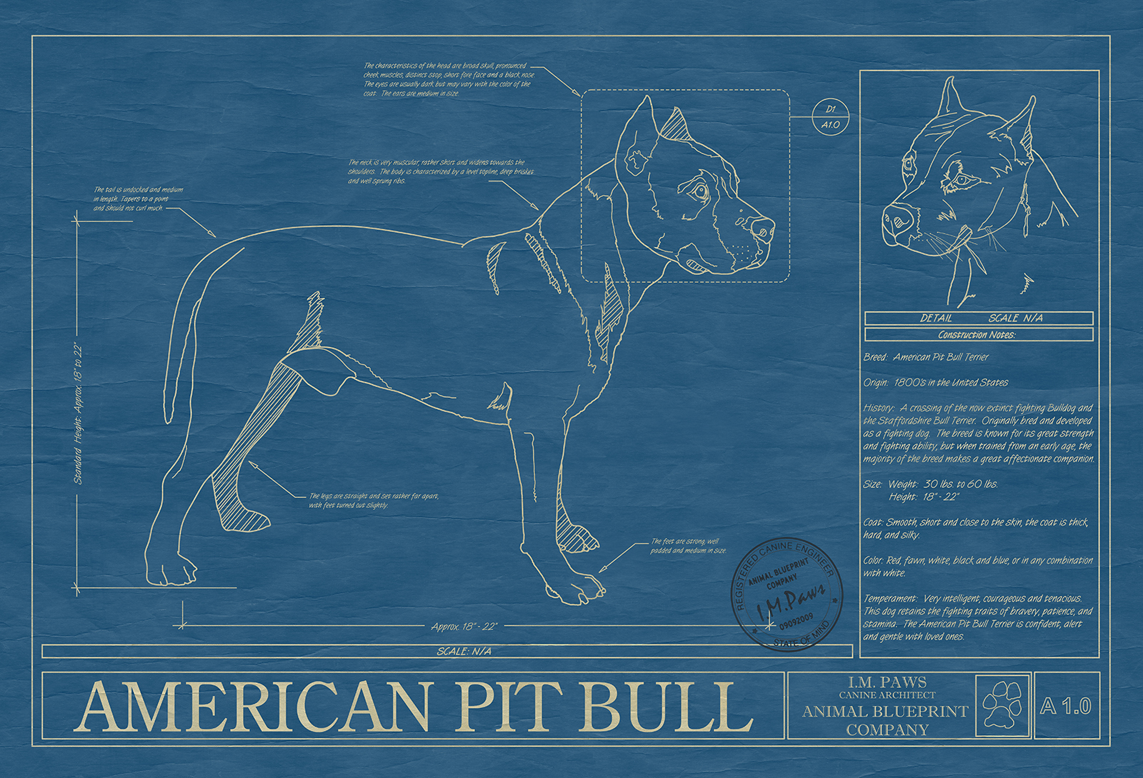 Pit bull american animal blueprint company click image to enlarge malvernweather Gallery