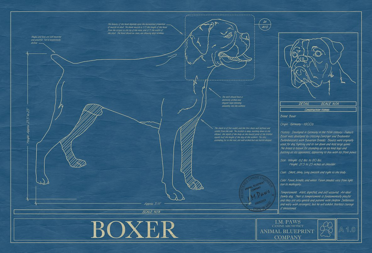 Matte only archives page 7 of 18 animal blueprint company boxer malvernweather Images