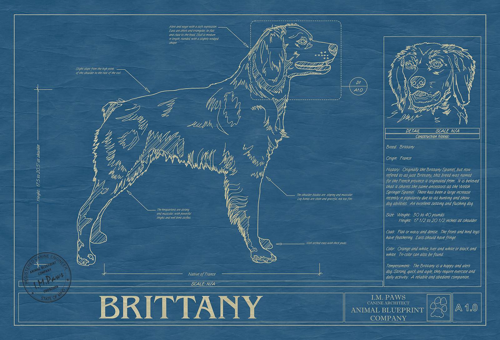 Brittany dog animal blueprint company click image to enlarge malvernweather Image collections