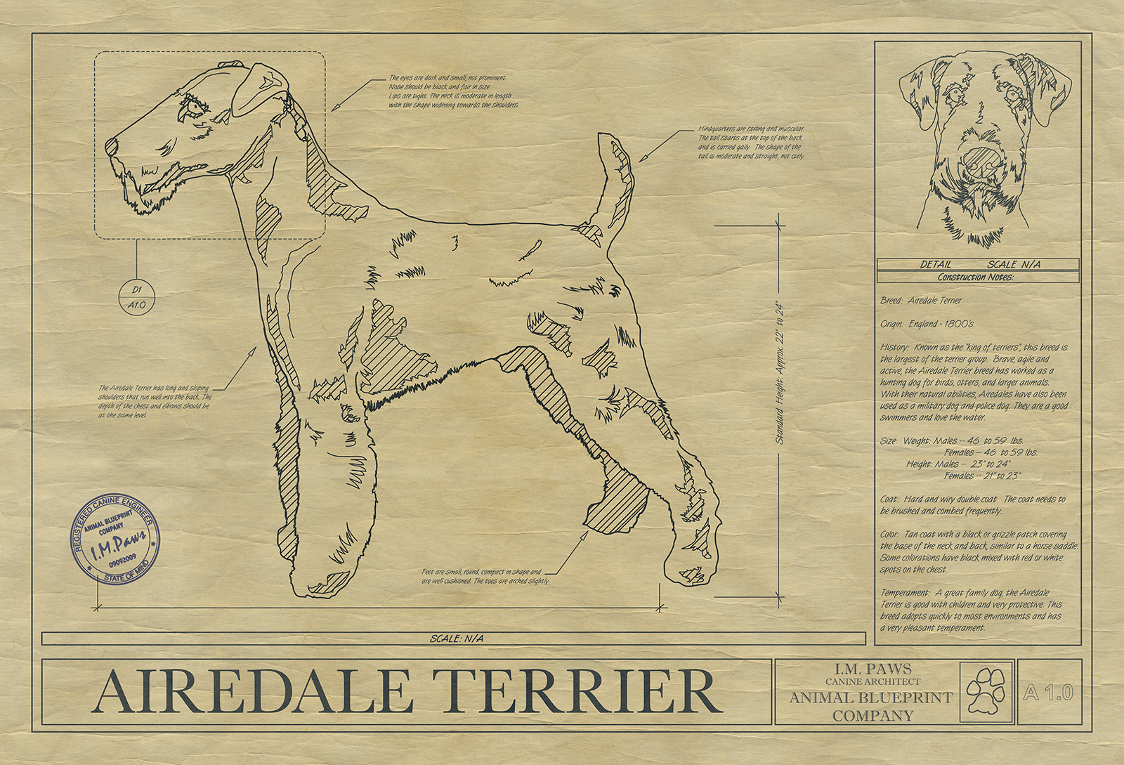 Airedale terrier art drawing animal blueprint company click image to enlarge malvernweather Gallery