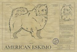 American Eskimo Dog art blueprint
