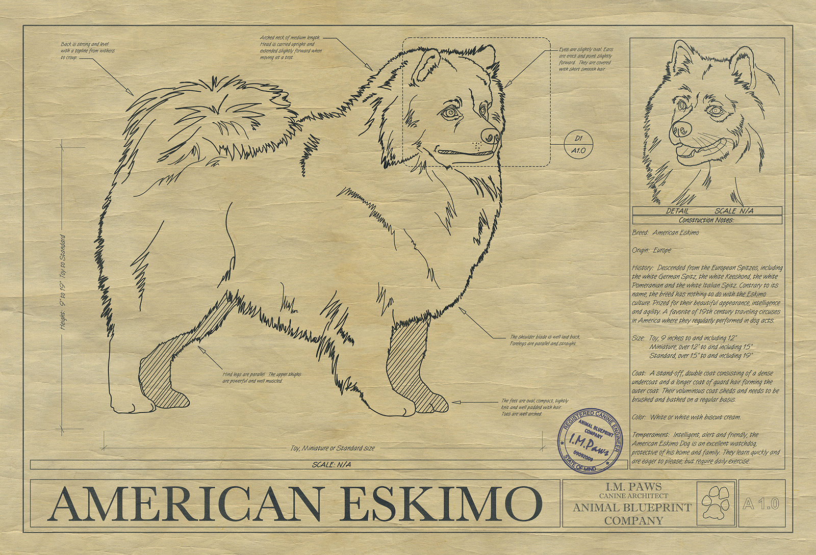 American eskimo drawing animal blueprint company click malvernweather Images