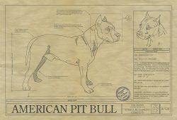 AMERICAN PIT BULL TERRIERArt Blueprint