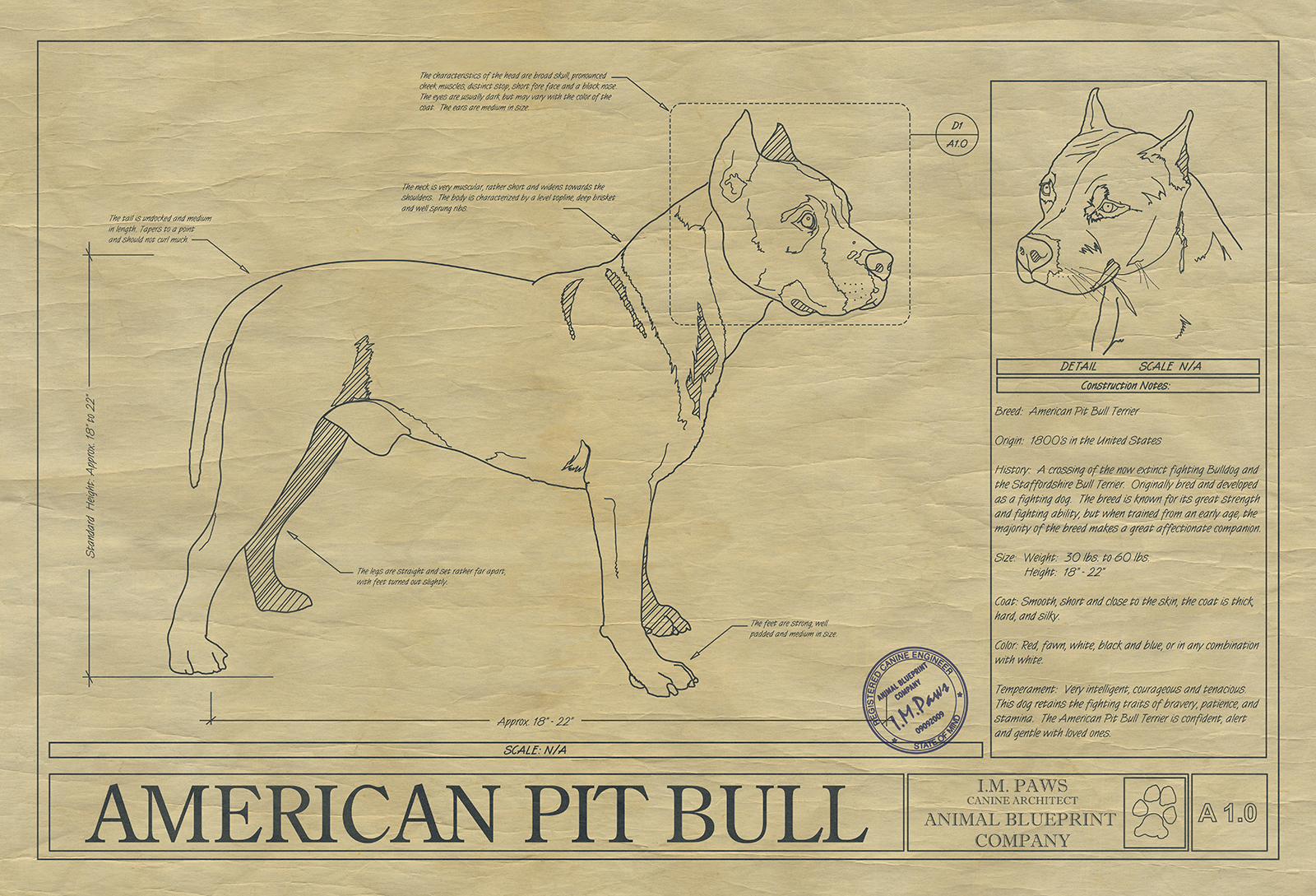 American pit bull drawing animal blueprint company click malvernweather Images