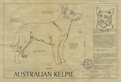 AUSTRALIAN KELPIE Blueprint Art