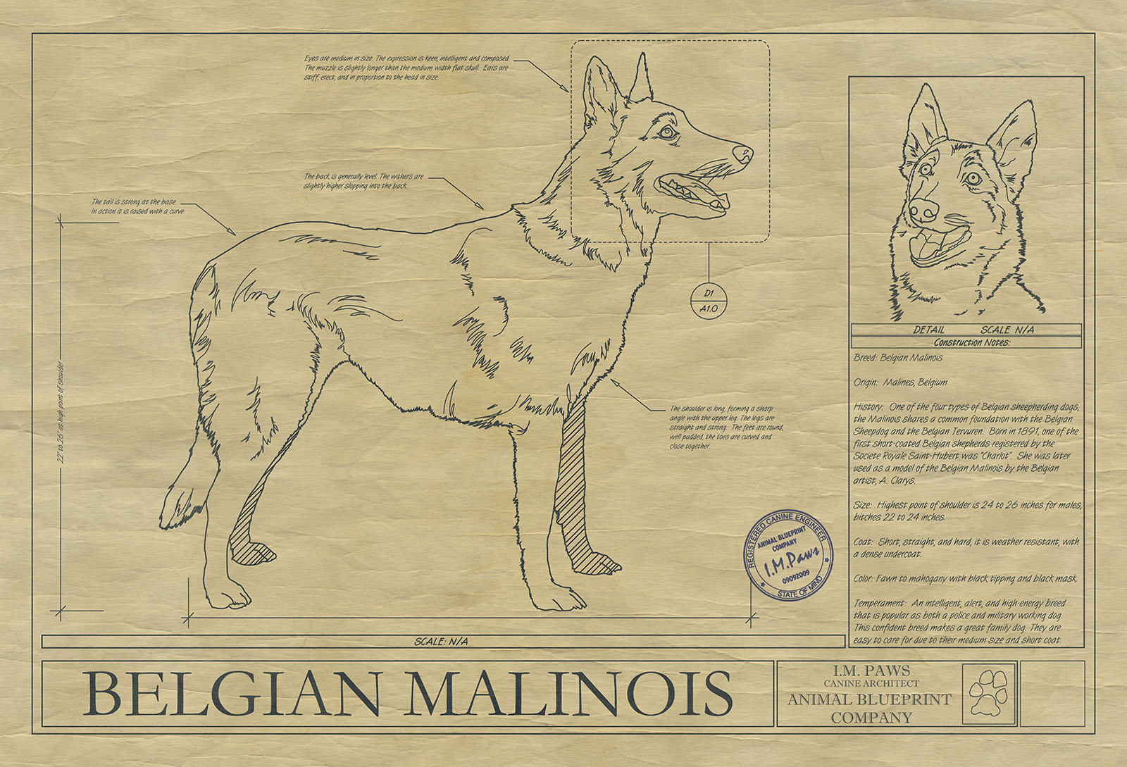 Belgian malinois drawing animal blueprint company click malvernweather Gallery