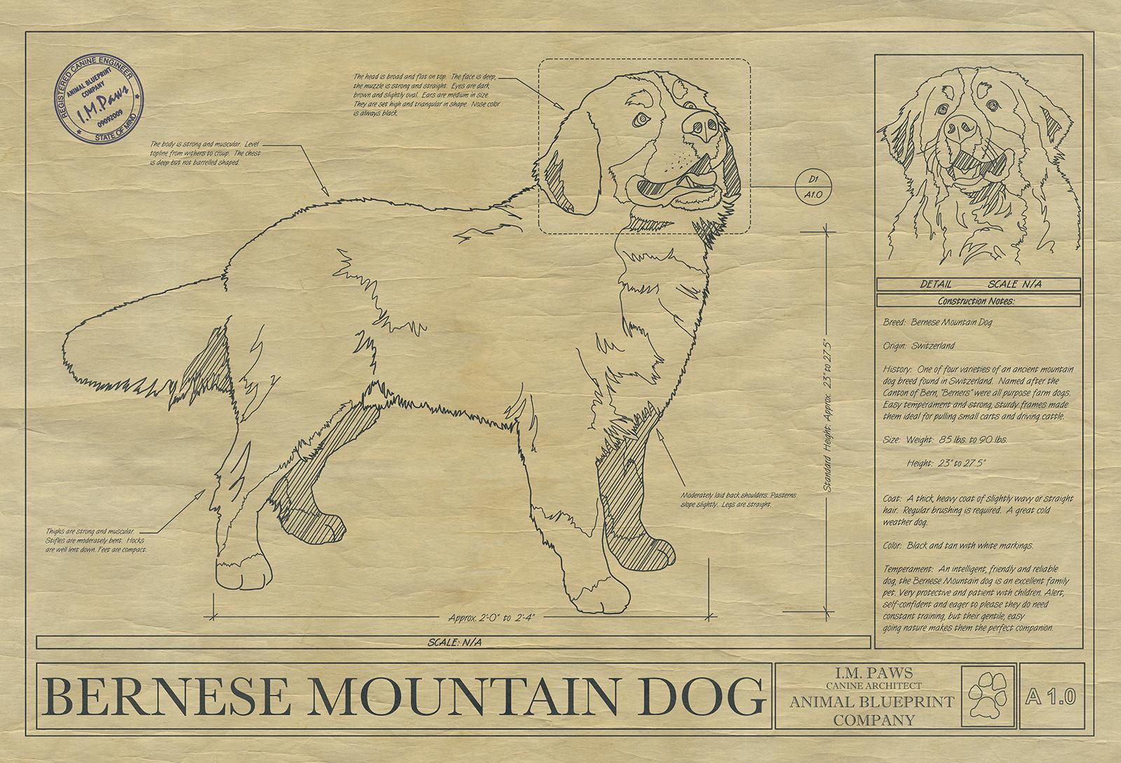 Bernese mountain dog drawing animal blueprint company click malvernweather Images