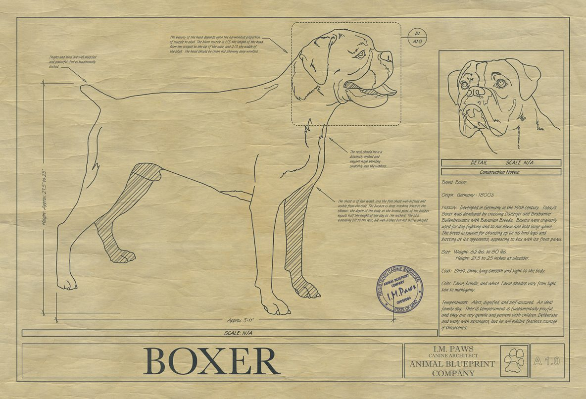 Animal drawings archives animal blueprint company boxer drawing malvernweather Image collections
