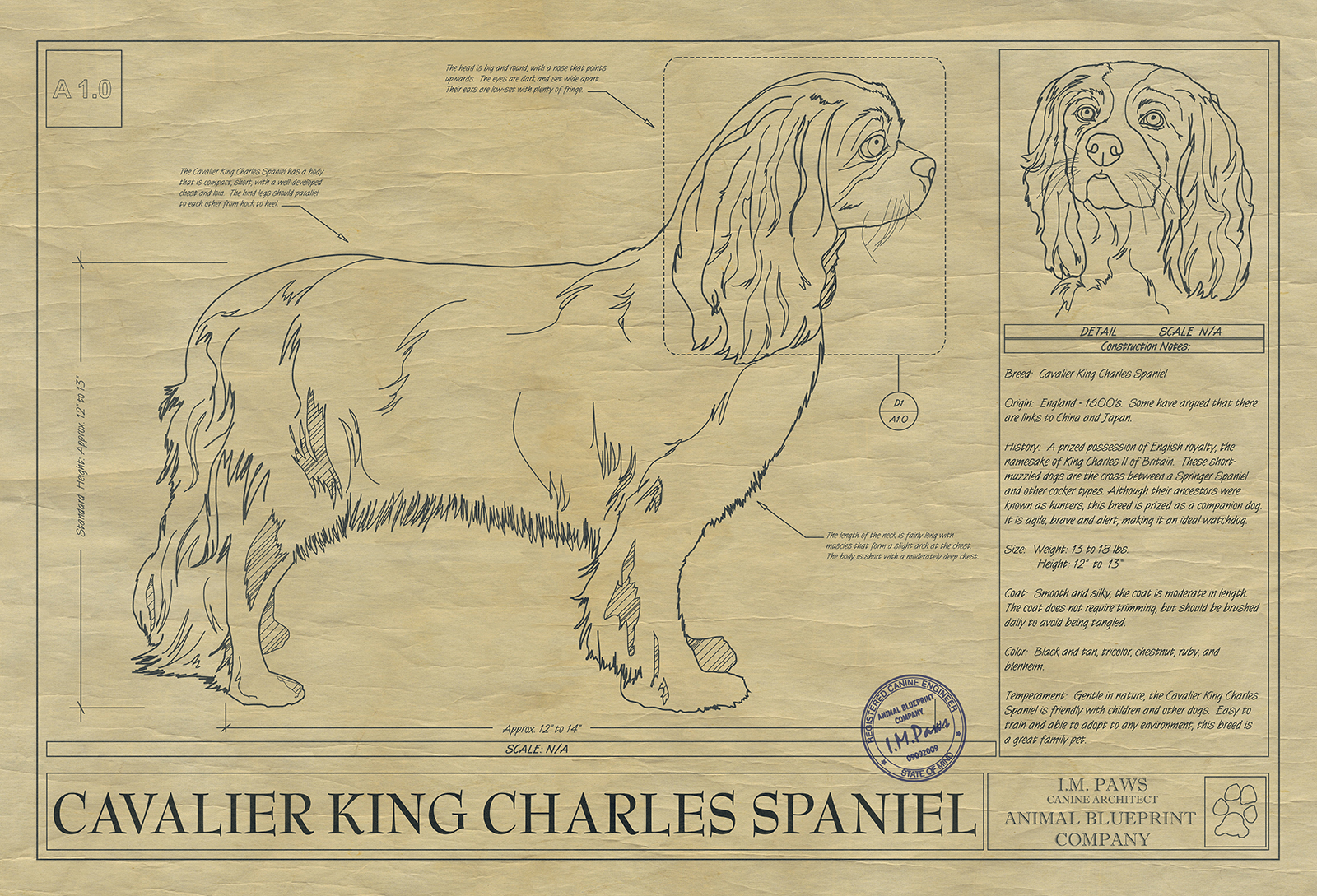 Cavalier king charles spaniel drawing animal blueprint company click image to enlarge malvernweather Gallery