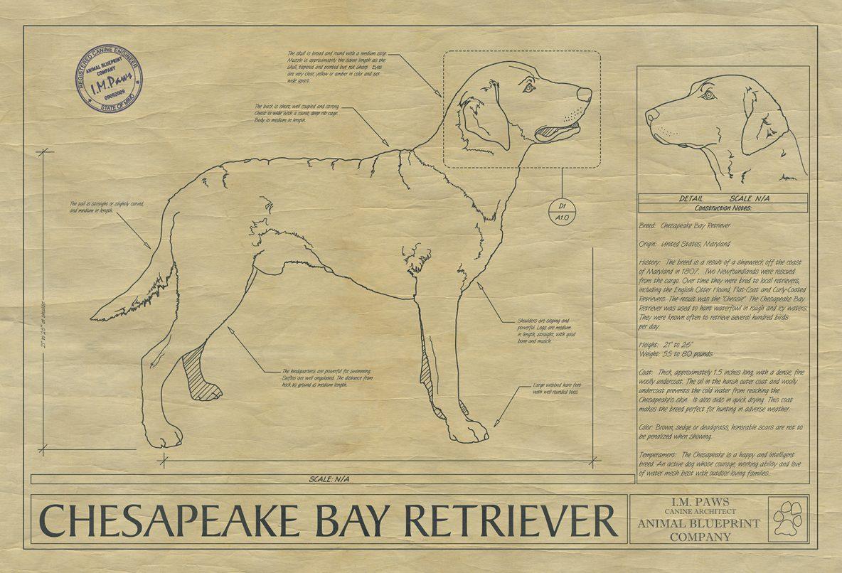 Animal Drawings Archives - Animal Blueprint Company