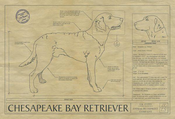 Chesapeake Bay Retreiver Drawing