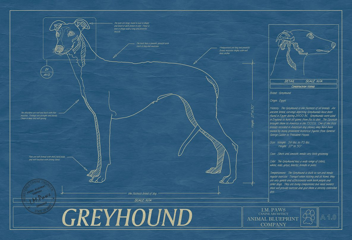 Standard frame size 19 x 25 and print size 13 x 19 archives greyhound malvernweather Image collections