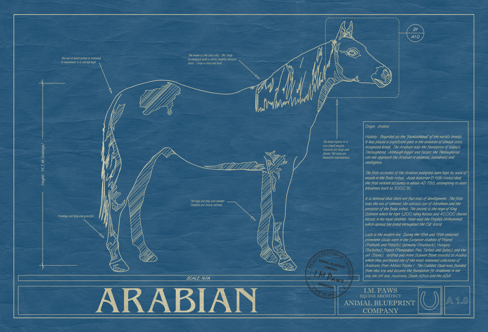Arabian horse animal blueprint company arabian horse wall blueprint malvernweather Image collections