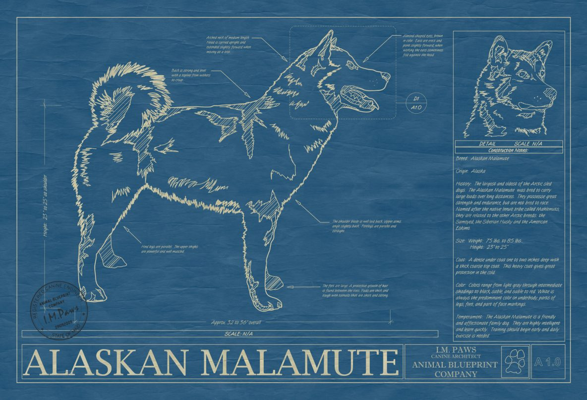 Pet dog animal art print drawings breeds from a to b animal blueprints dog blueprints breeds a b malvernweather Gallery